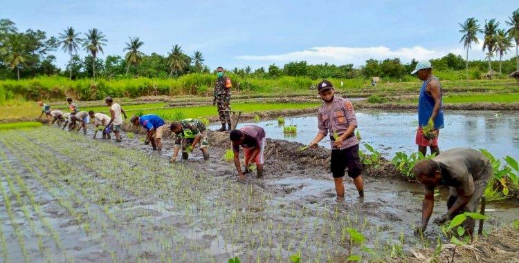 Bersinergi TNI POLRI Motivasi Para Petani di Alor Tingkatkan Ketehanan Pangan