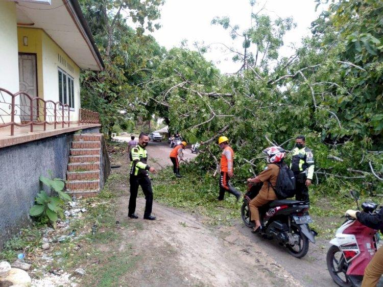 Satlantas Polres Rote Ndao Sigap Bantu Evakuasi Pohon Tumbang Halangi Jalan
