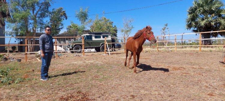 Bentuk Pasukan Satwa Berkuda, Kapolda NTT Tinjau Tempat Perawatan dan Kandang Ranch Kuda Polda NTT